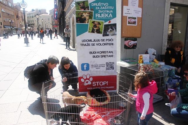 azil društvo pas