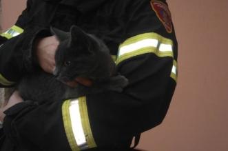bijesna crna maca